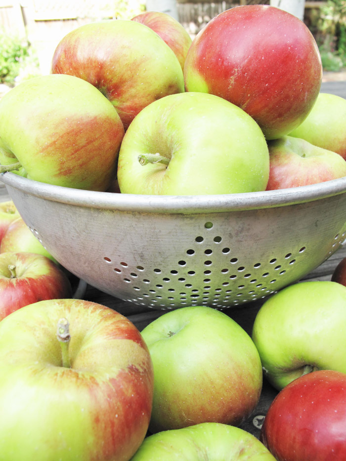 Apples - asquirrelinthekitchen.com